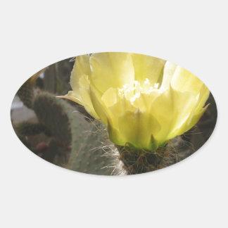 Sunlit Cactus Flower Sticker