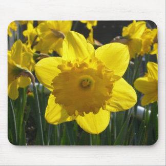 Sunlit Daffodil Mouse Pad