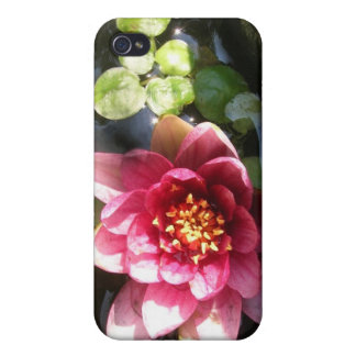Sunlit Dark Pink Water Lily Flower iPhone 4/4S Cases