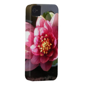 Sunlit Dark Pink Water Lily Flower iPhone 4 Case-Mate Cases