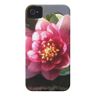 Sunlit Dark Pink Water Lily Flower iPhone 4 Cover