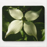 Sunlit Dogwood Blossom White Spring Flower Mouse Pad