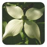 Sunlit Dogwood Blossom White Spring Flower Square Sticker