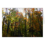 Sunlit Fall Forest Autumn Landscape Photography Card