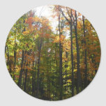 Sunlit Fall Forest Autumn Landscape Photography Classic Round Sticker