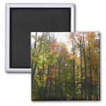 Sunlit Fall Forest Autumn Landscape Photography Magnet