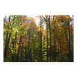 Sunlit Fall Forest Autumn Landscape Photography Photo Print