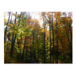 Sunlit Fall Forest Autumn Landscape Photography Postcard
