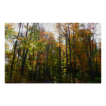 Sunlit Fall Forest Autumn Landscape Photography Poster