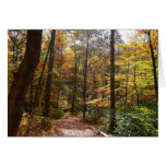 Sunlit Fall Trail in Laurel Hill State Park Card