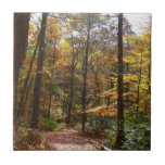 Sunlit Fall Trail in Laurel Hill State Park Ceramic Tile