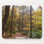 Sunlit Fall Trail in Laurel Hill State Park Mouse Pad