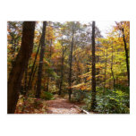 Sunlit Fall Trail in Laurel Hill State Park Postcard