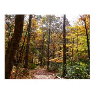Sunlit Fall Trail in Laurel Hill State Park Postcard