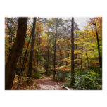 Sunlit Fall Trail in Laurel Hill State Park Poster