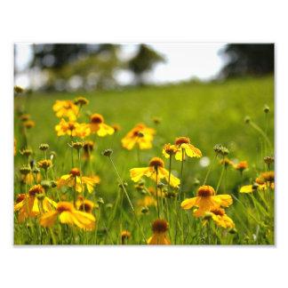 Sunlit flowers in a field photo