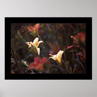 Sunlit Flowers Poster