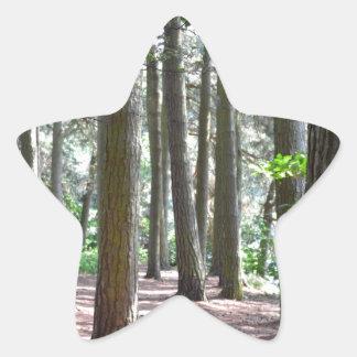 Sunlit Forest Floor Star Sticker