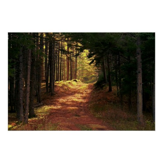 Sunlit Forest Path Poster