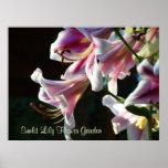 Sunlit Lily Flower Garden art print Pink Lilies