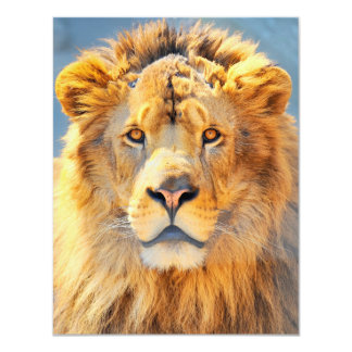 Sunlit Lion Head Card
