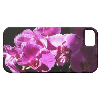 Sunlit Orchids iPhone 5 Cases