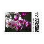 Sunlit Orchids Stamps