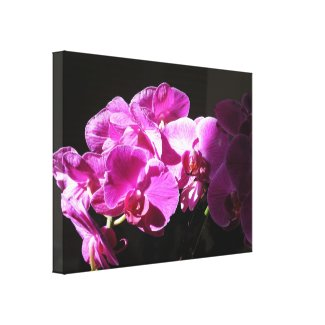 Sunlit Orchids Stretched Canvas Print