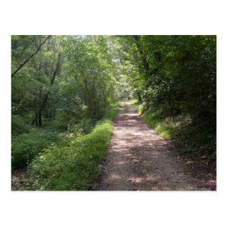 Sunlit Path Postcard