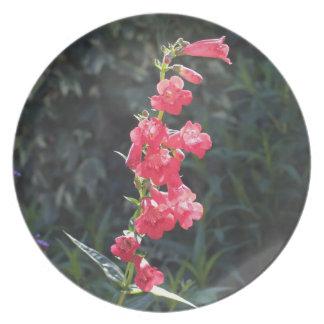 Sunlit Pink Penstemon Flower Dinner Plate