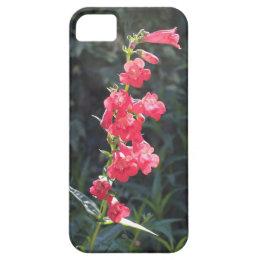 Sunlit Pink Penstemon Flower iPhone SE/5/5s Case