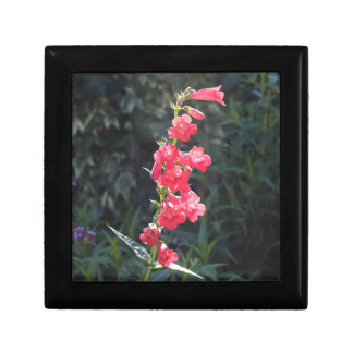 Sunlit Pink Penstemon Flower Jewelry Box