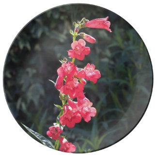 Sunlit Pink Penstemon Flower Porcelain Plate