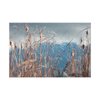 Sunlit reeds and cattails canvas print