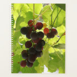 "Sunlit ripe grapes. planner<br><div class=""desc"">Taken out of my dining room window.</div>"