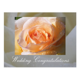 Sunlit Rose Wedding Postcard