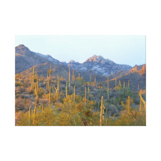 Sunlit Saguaros in Winter Wrapped Canvas