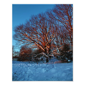 Sunlit Snow Covered Trees Photo Print