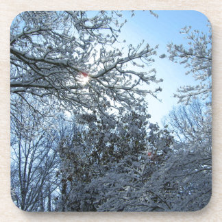 Sunlit Snowy Trees Starburst Blue Sky Winter Coaster