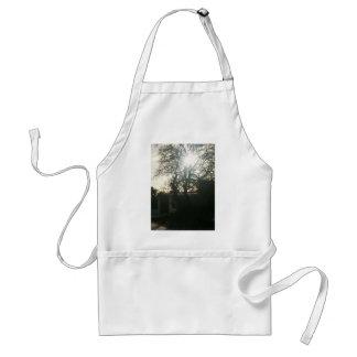 Sunlit tree. apron