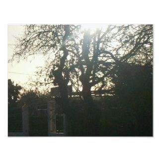 Sunlit tree. card