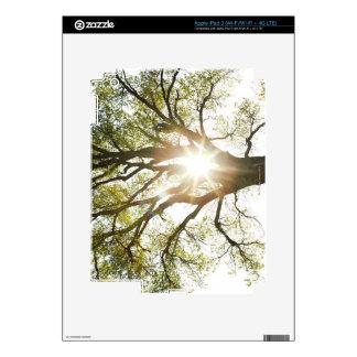 Sunlit Tree iPad 3 Skin