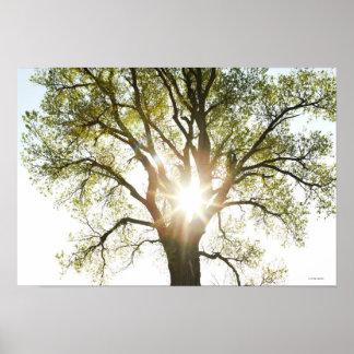 Sunlit Tree Poster