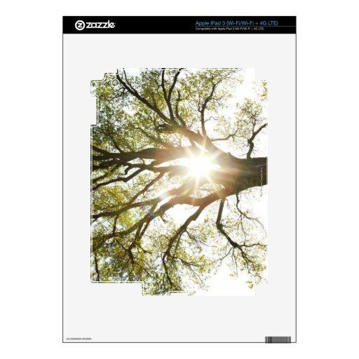 Sunlit Tree Skin For iPad 3