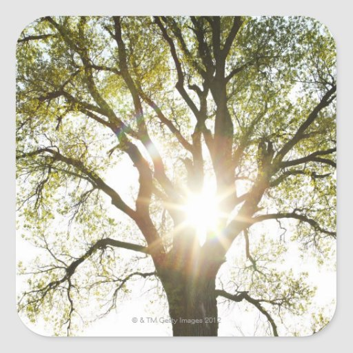 Sunlit Tree Stickers