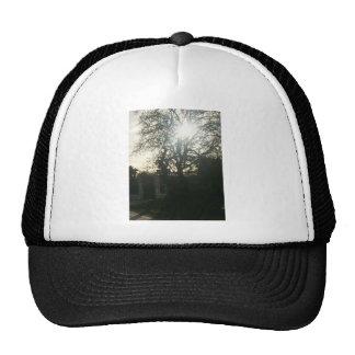 Sunlit tree. trucker hat