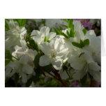 Sunlit White Azaleas Beautiful Spring Flowers Card