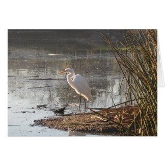 Sunlit White Egret Card