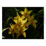 Sunlit Yellow Orchids Elegant Floral Card