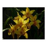 Sunlit Yellow Orchids Elegant Floral Postcard